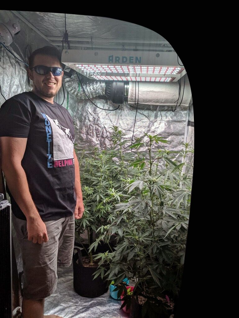 Huge cannabis growing under LED grow light in 4x4 tent.