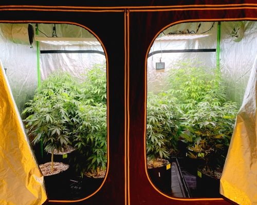 Comparison of LED grow lights for cannabis